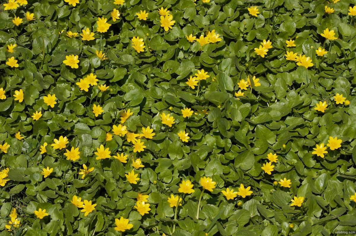 2009 Коломенское Москва парк природа деревья жёлтые цветы