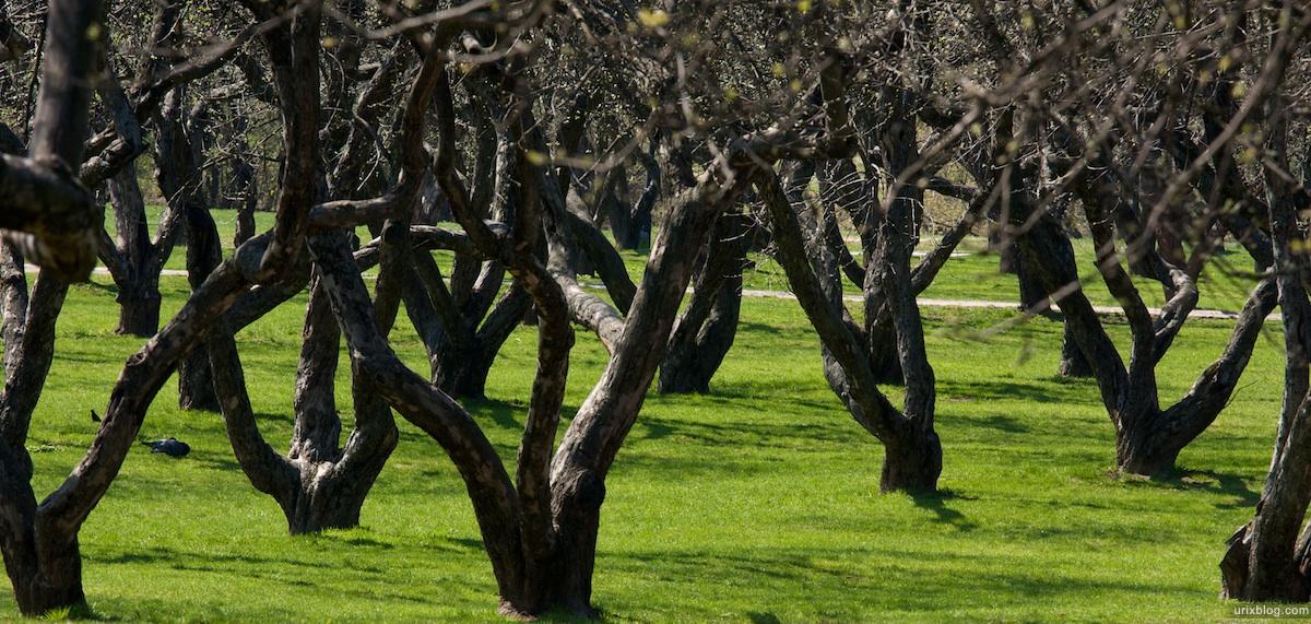 2009 Коломенское Москва парк природа деревья