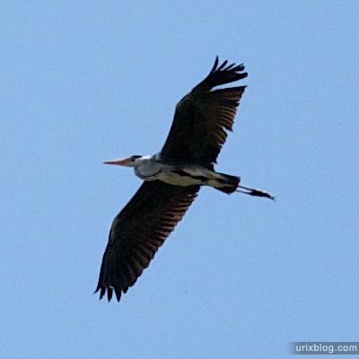 2009 птица аист река Дубна сплав Россия путешествие катамаран лодка