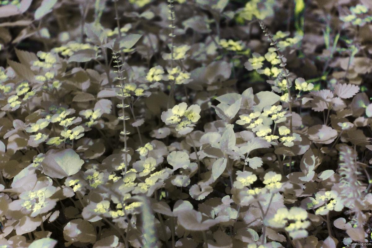 2009 инфракрасный ИК IR infrared B+W река Дубна сплав Россия путешествие лес цветы