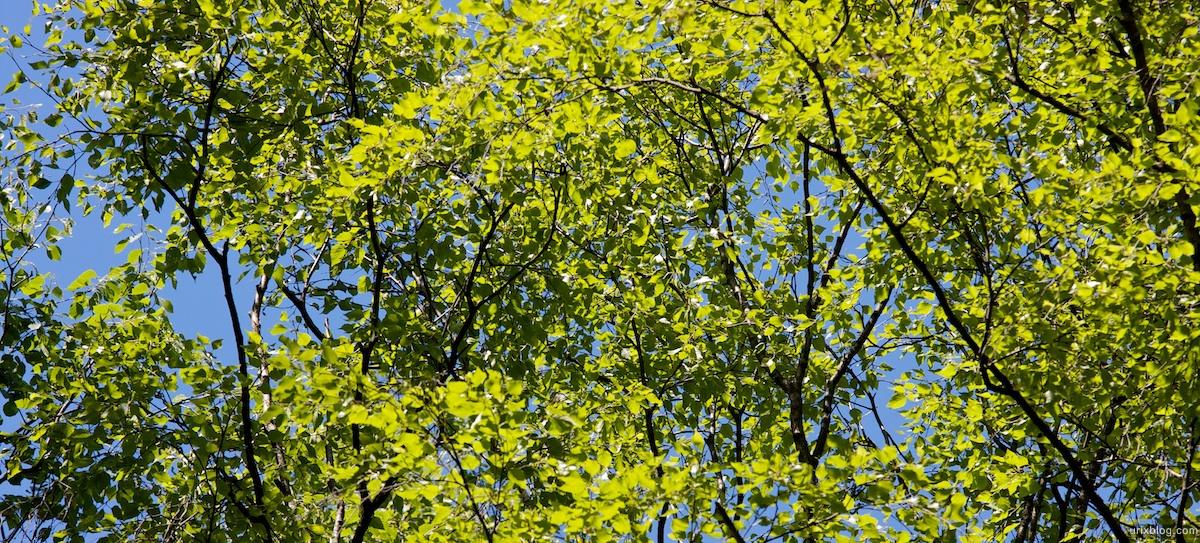 2009 Битцевскийлесопарк природа дерево Москва