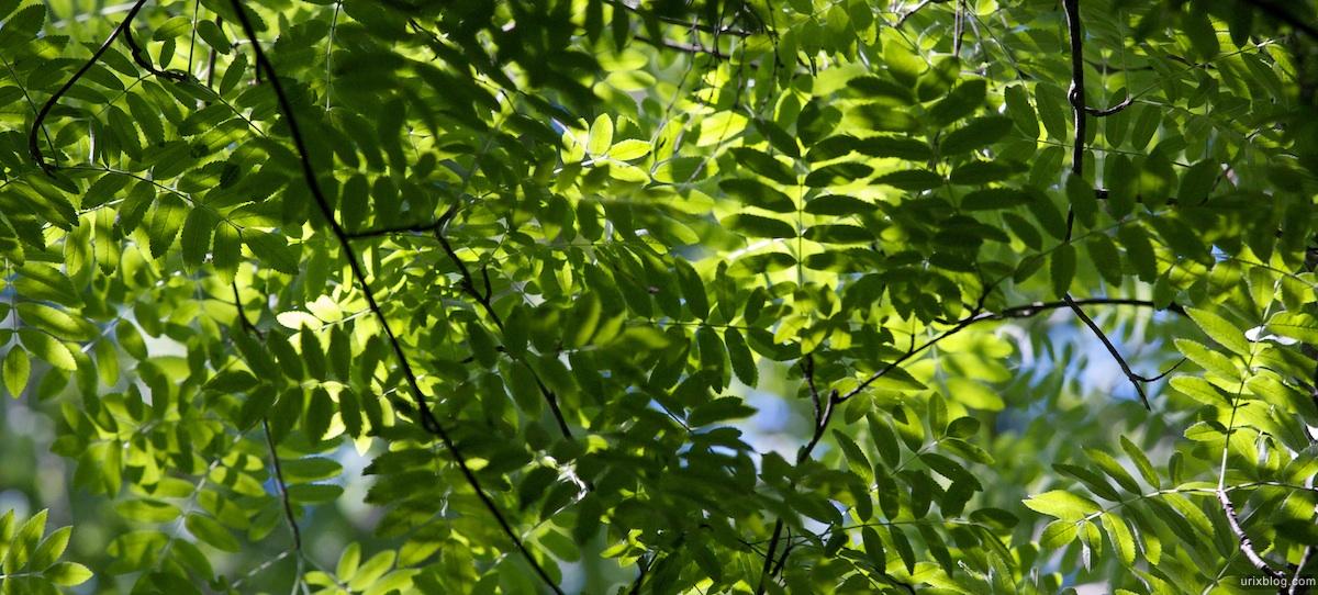 2009 Битцевскийлесопарк природа листья дерево Москва