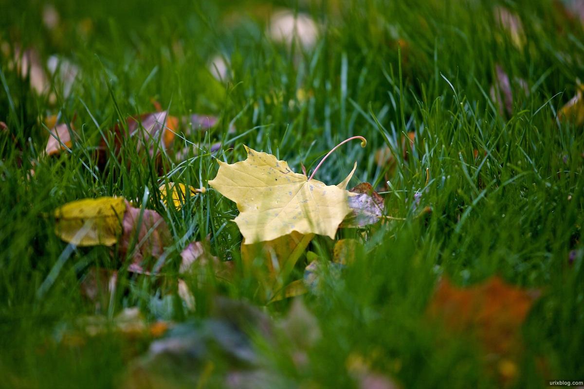 2009 Москва парк Лефортово осень газон