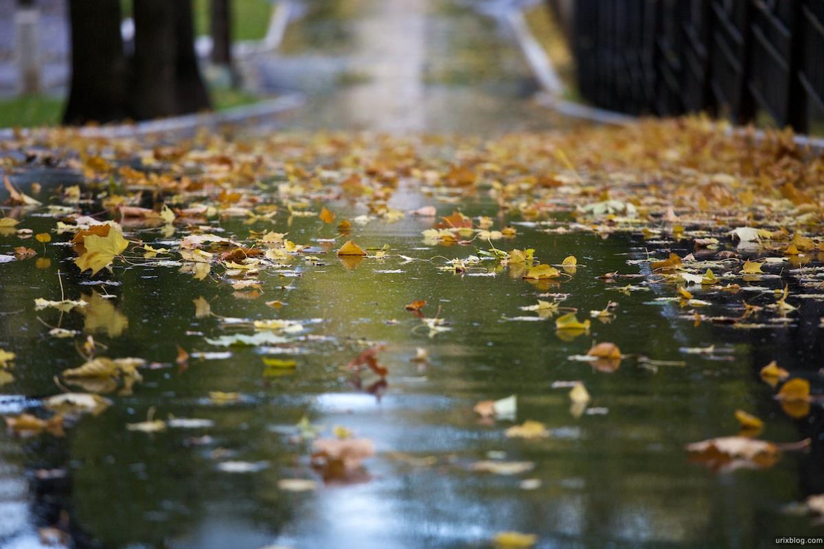 2009 Москва парк Лефортово осень мокрый асфальт жёлтые листья