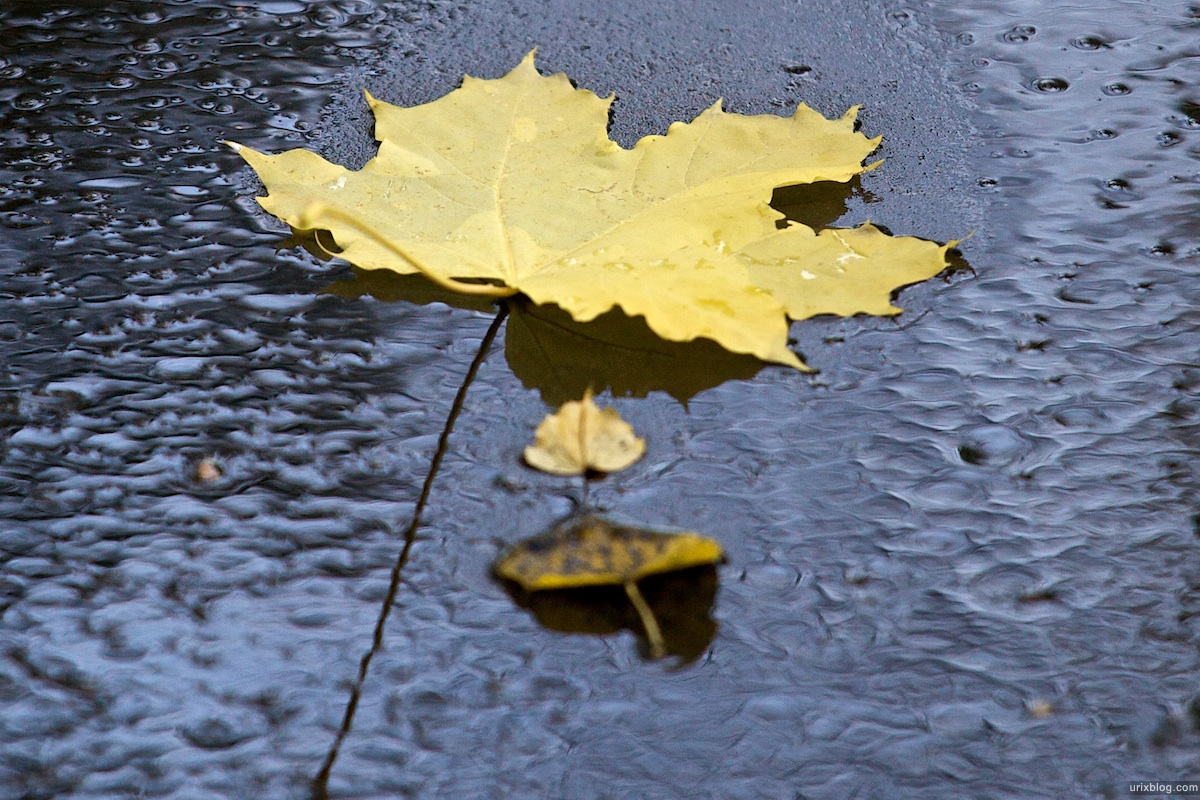 2009 Москва парк Лефортово осень жёлтые листья