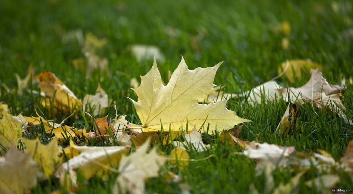 2009 Москва парк Лефортово осень жёлтые листья газон