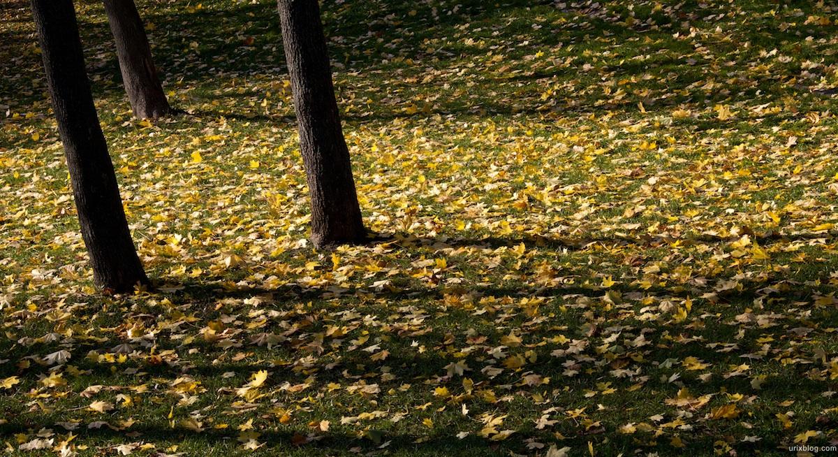 2009 Москва Царицыно парк жёлтые листья газон осень