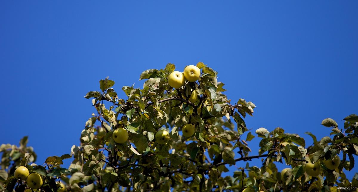 2009 Москва Царицыно парк яблоки осень
