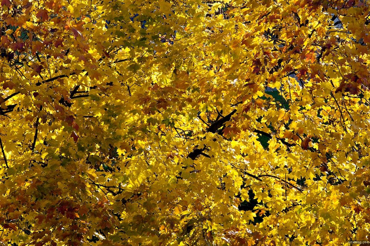 2009 Москва Царицыно парк жёлтые листья осень