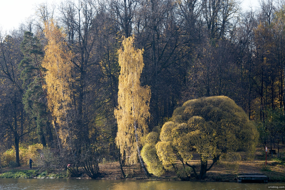 2009 Москва Царицыно парк берёза осень