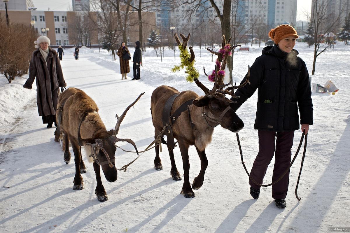 2010 олени Отрадное парк, Москва