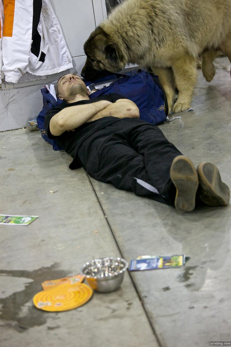 2010 Выставка собаквКрокусЭкспо, Москва
