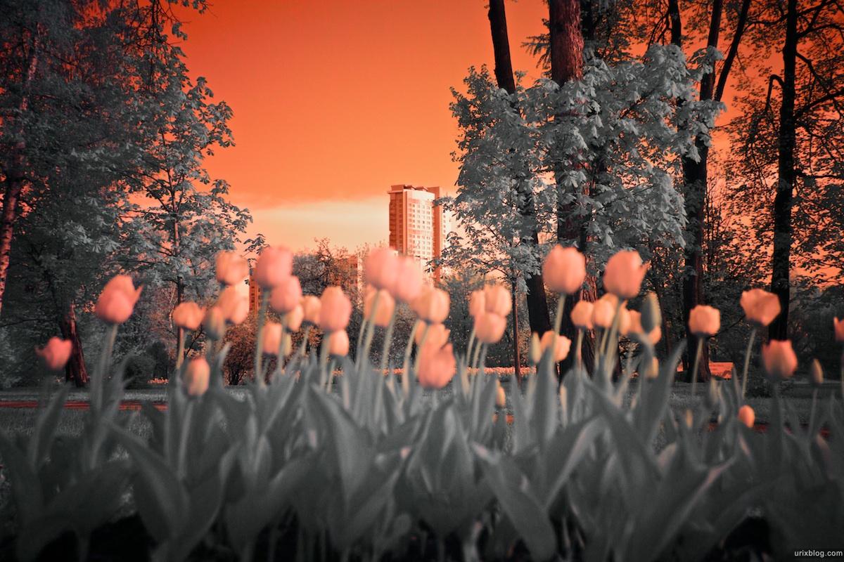 тюльпаны Botanichesky Sad Metro station park in infrared, инфракрасный парк около Ботанического сада, Hoya R72 Москва 2010