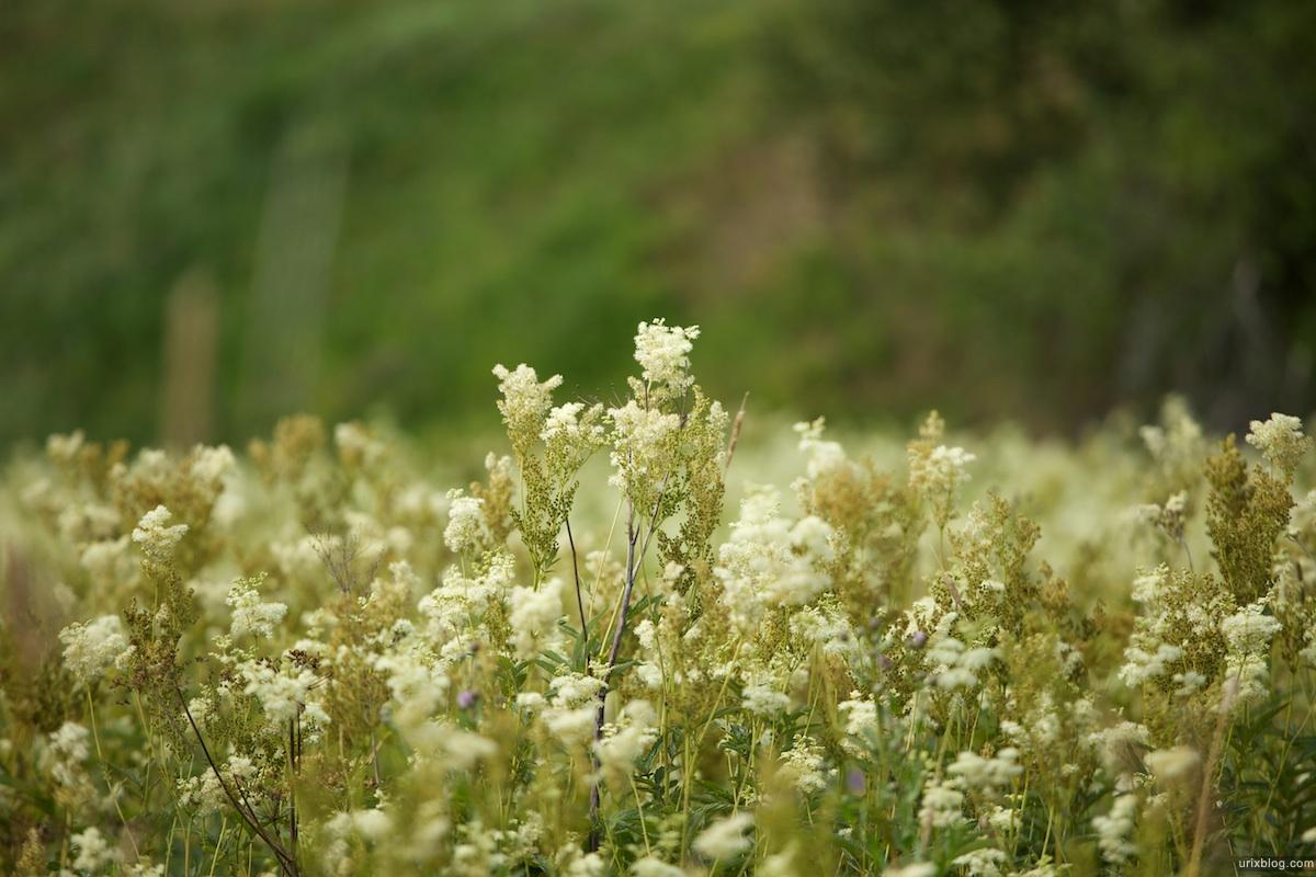 2010 поле цветы трава ГородецкоеГульбище