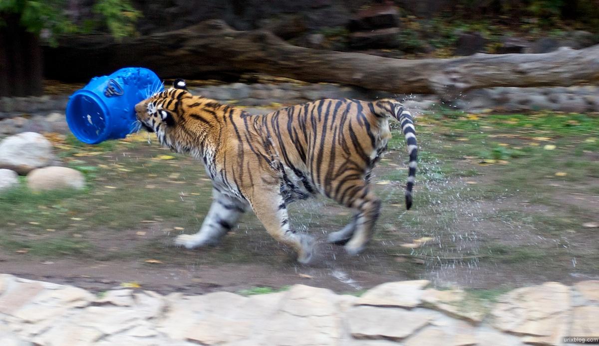 2010 Зоопарк Москва Moscow zoo