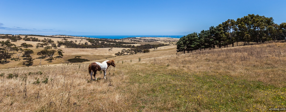 2010, horse, Fleurieu Peninsula, South Australia
