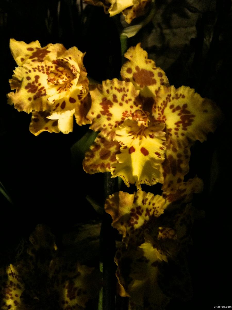 2011 Выставка Орхидей в Аптекарском Огороде, Москва