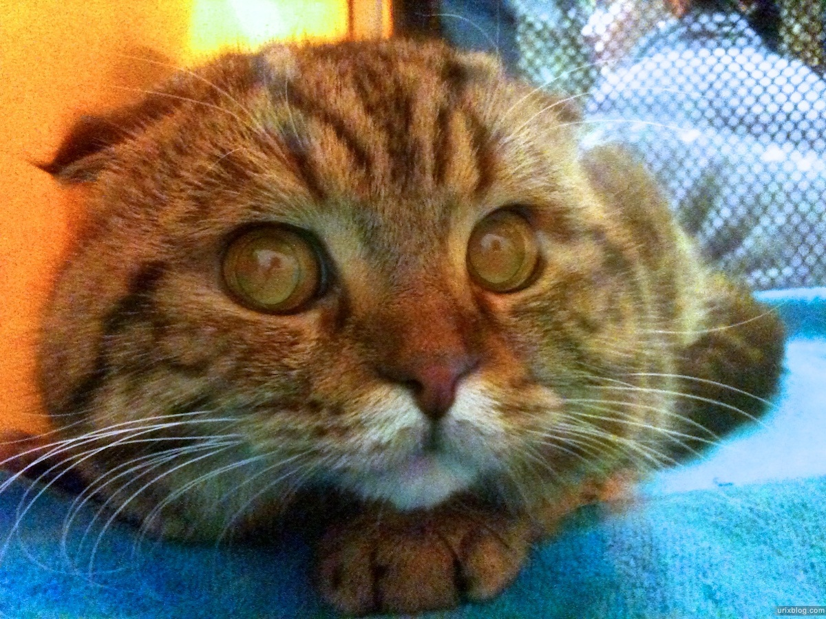 2011 выставка кошки тишинка москва