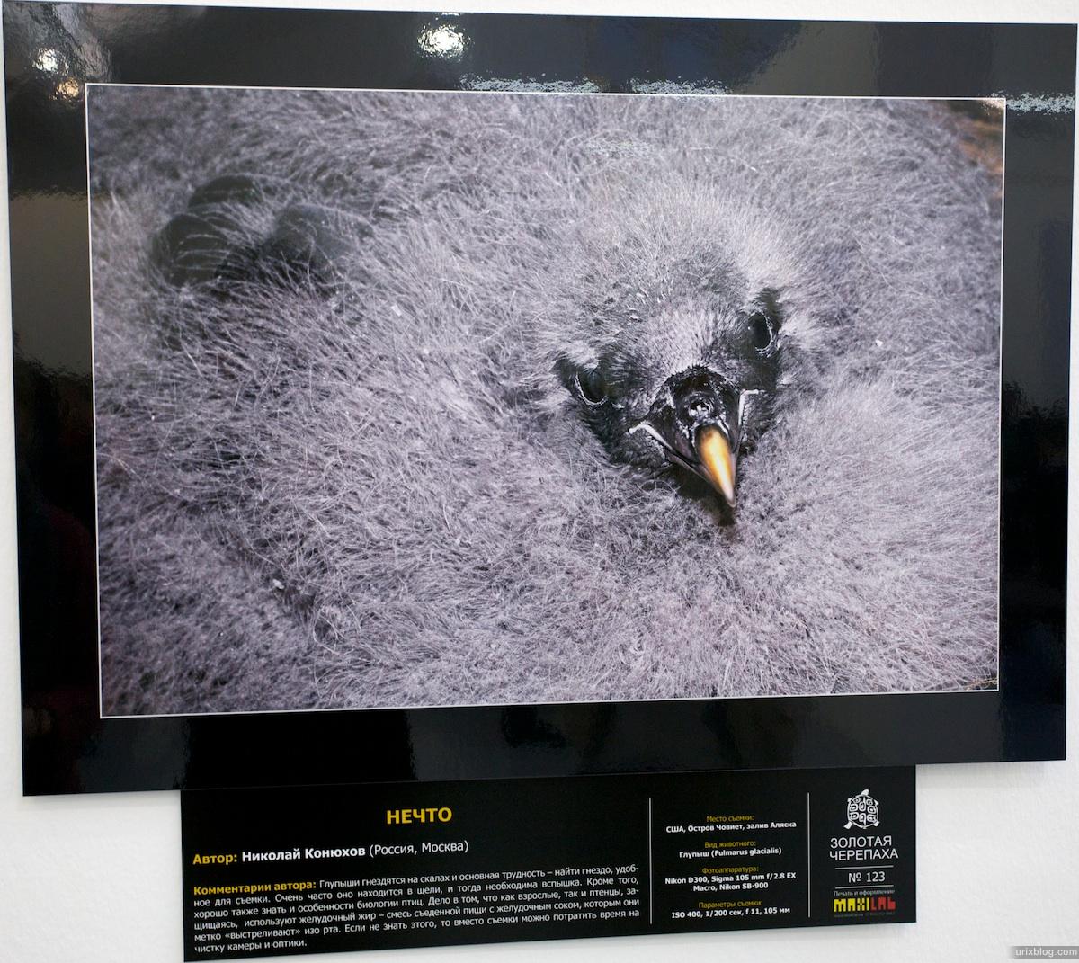 2011 Москва Новый Манеж, выставка Золотая Черепаха 2011, фотографии