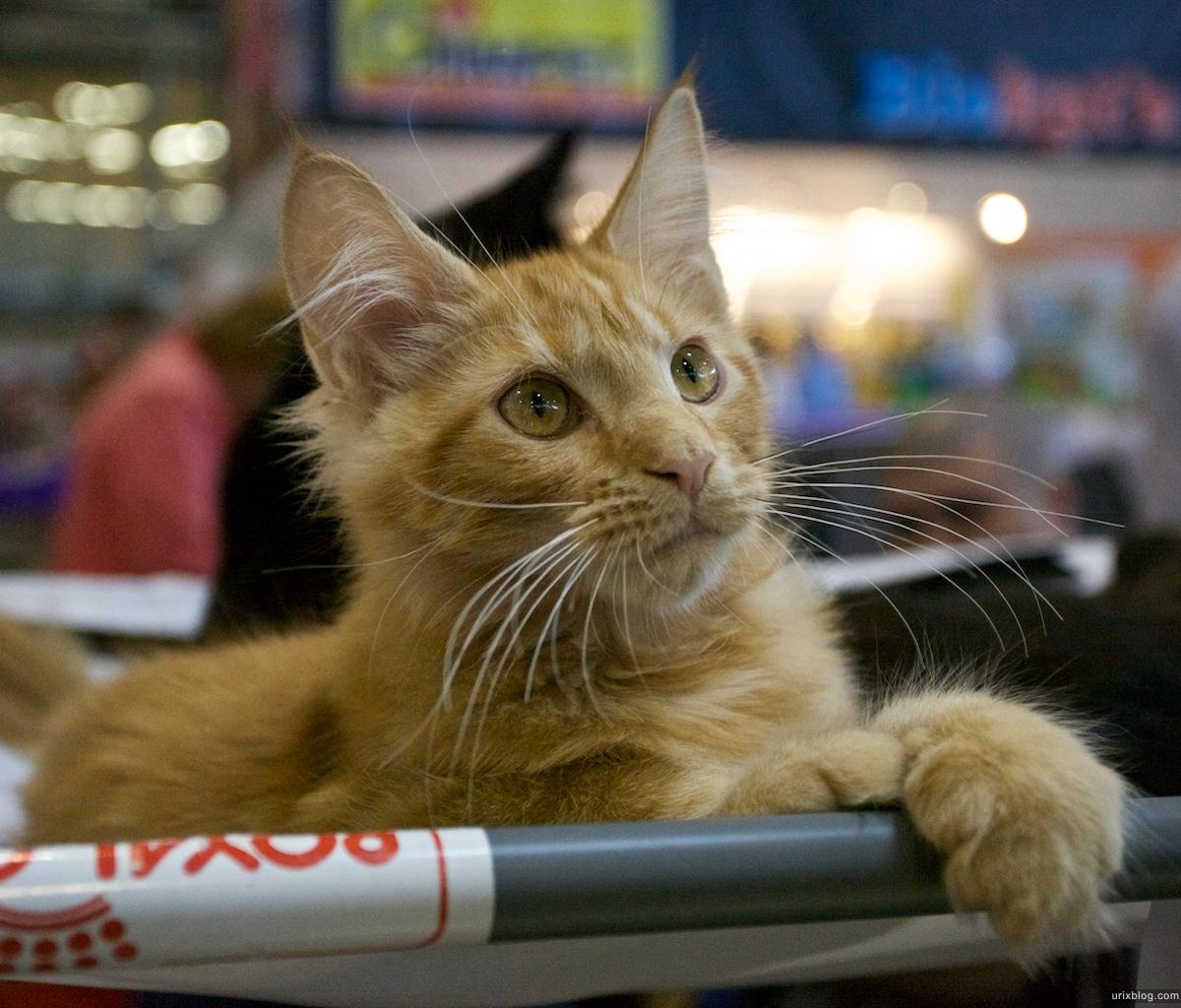 Москва, выставка кошек, ВВЦ, 2011, Инфокот.рф