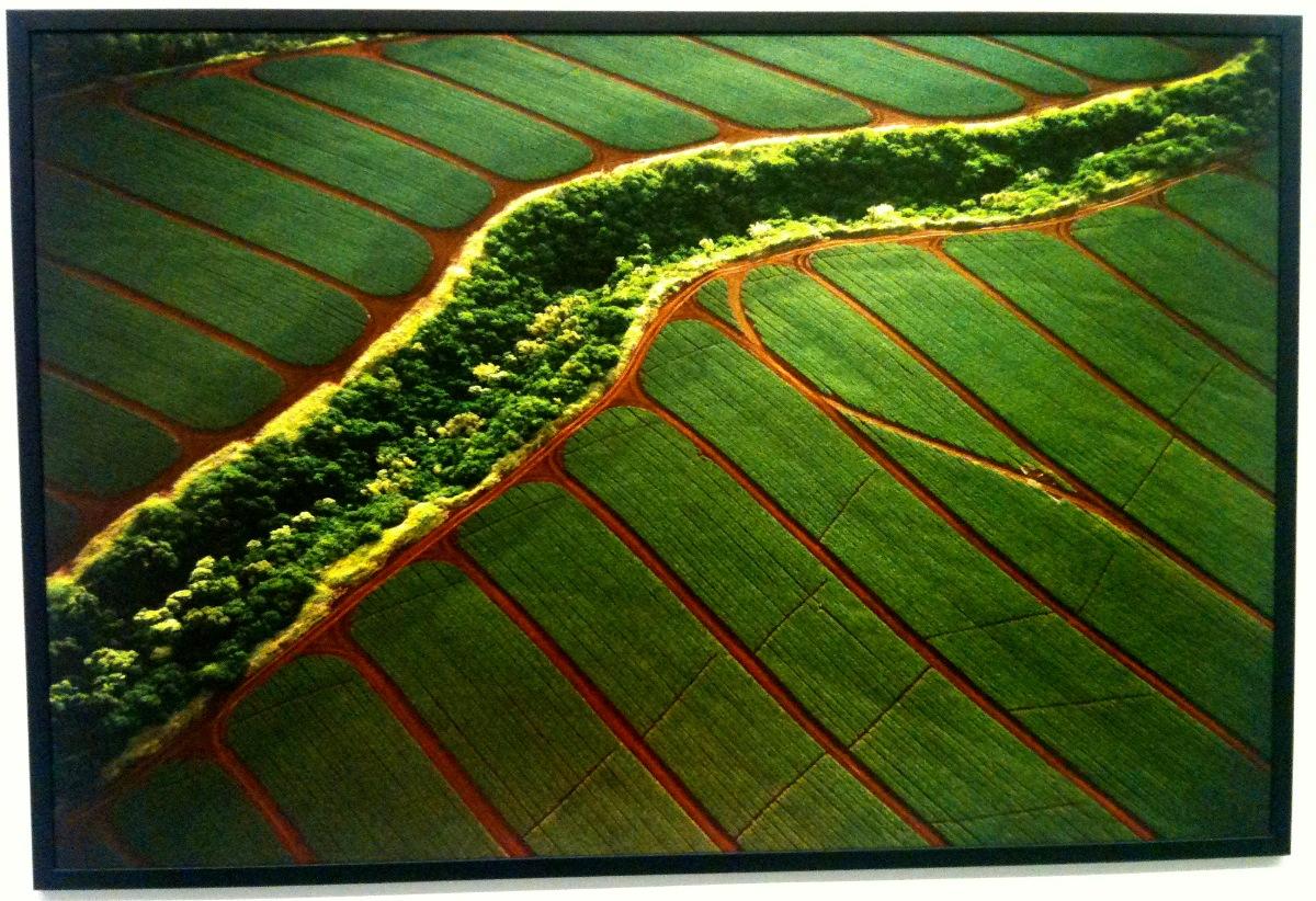 2011 Мультимедия Арт Музей лес