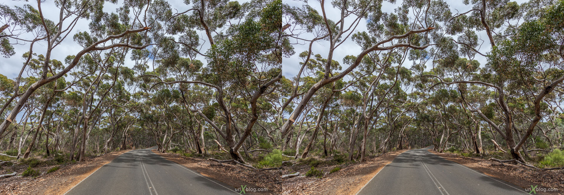 road, forest, Kelly Hill Conservation Park, Kangaroo Island, Australia, 3D, stereo pair, cross-eyed, crossview, cross view stereo pair, stereoscopic, 2011