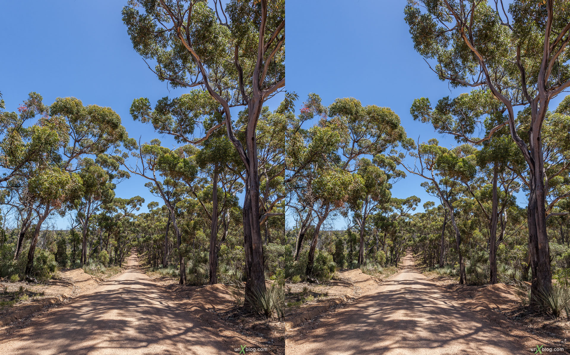 forest, road, Ravine Des Casoars Wilderness Protection Area, Kangaroo Island, Australia, 3D, stereo pair, cross-eyed, crossview, cross view stereo pair, stereoscopic, 2011