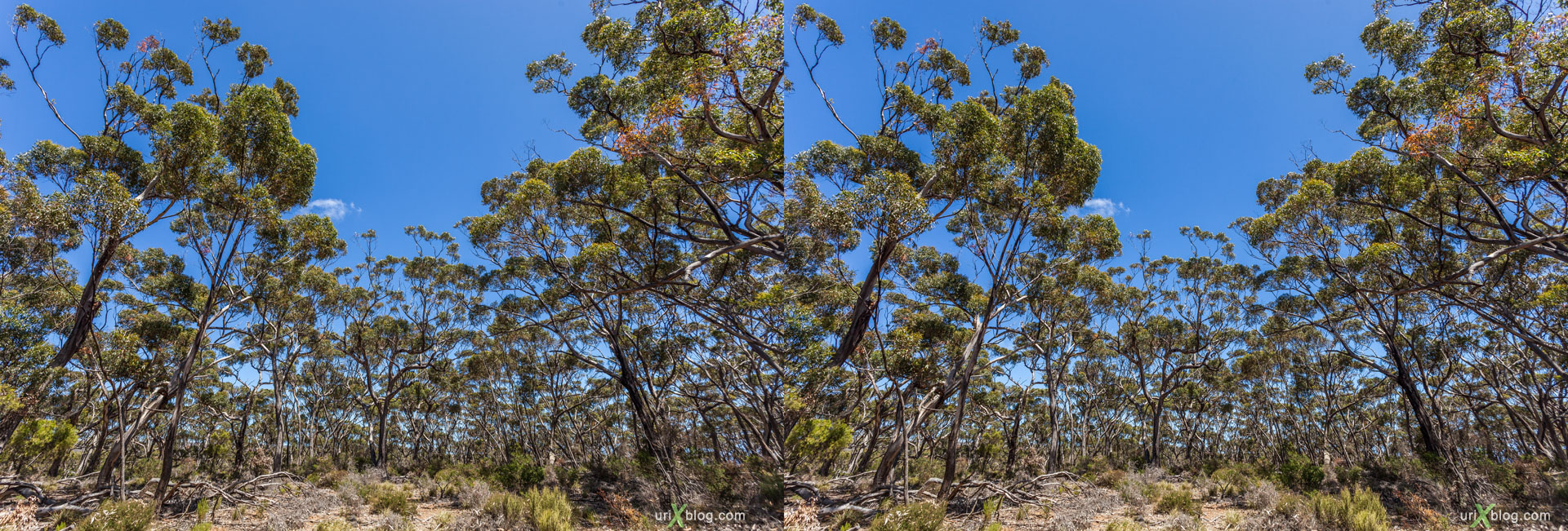 forest, cemetery, Cape Borda Lighthouse, Ravine Des Casoars Wilderness Protection Area, Kangaroo Island, Australia, 3D, stereo pair, cross-eyed, crossview, cross view stereo pair, stereoscopic, 2011