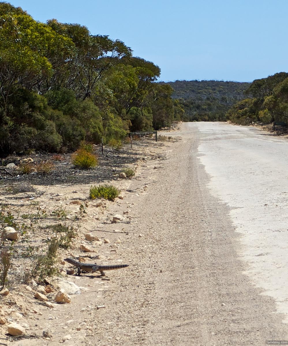 2010 South Australia