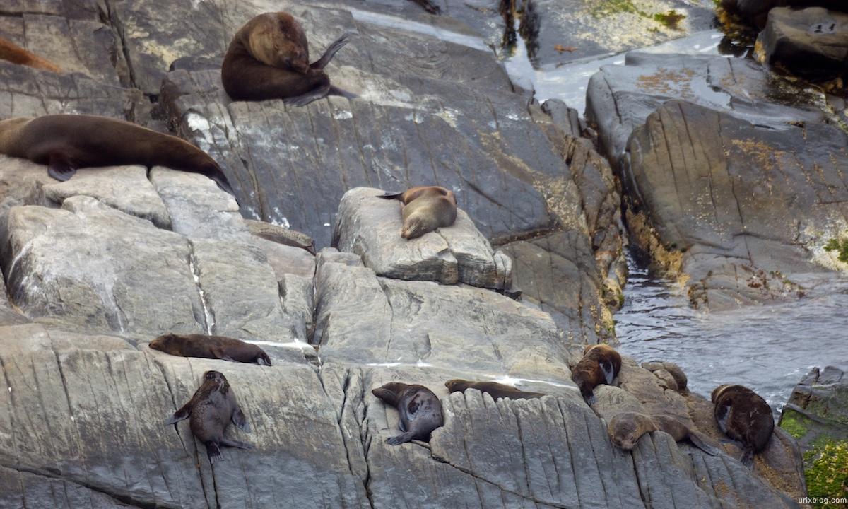 2011 South Australia, Kangaroo Island, Остров Кенгуру, Южная Австралия, Admiral's Arch, Australian Sea Lions морские львы