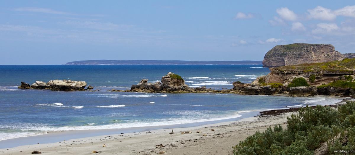 2011 South Australia, Kangaroo Island, Остров Кенгуру, Южная Австралия, Seal Bay, Australian Sea Lions