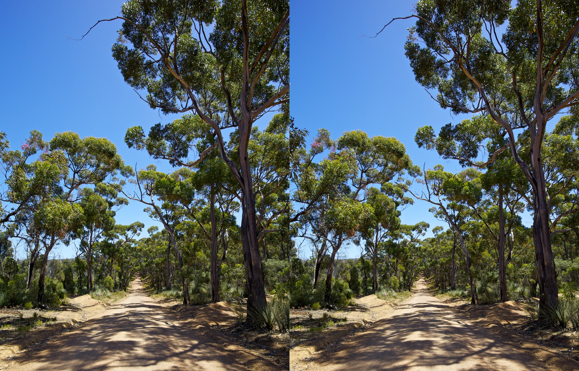 2011 South Australia, Kangaroo Island, Остров Кенгуру, Южная Австралия, Flinders Chase, forrest, лес, road, дорога, 3D, stereo, cross-eyed, стерео