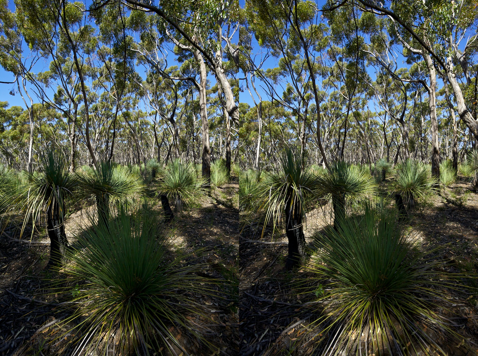 2011 South Australia, Kangaroo Island, Остров Кенгуру, Южная Австралия, Flinders Chase, Platypus Waterholes and Rocky River Hike, 3D, stereo, cross-eyed, стерео