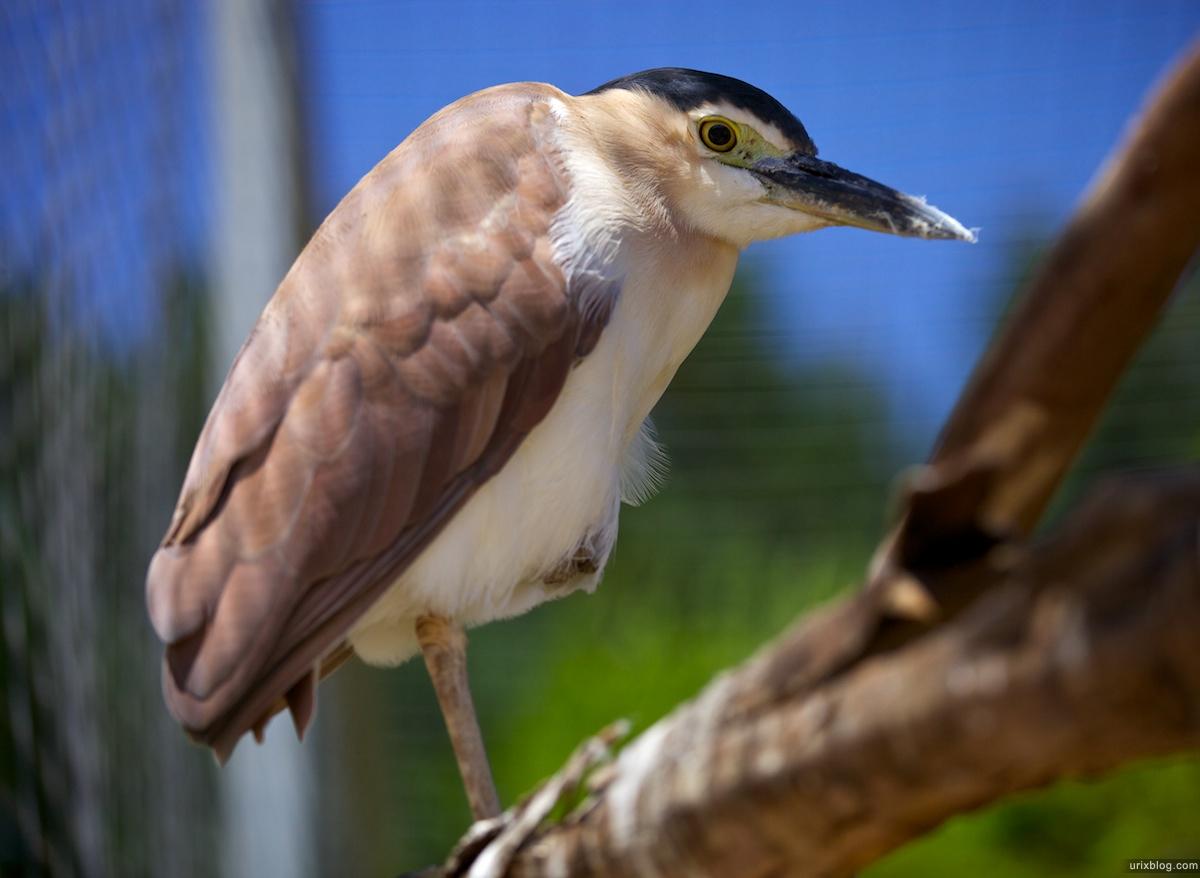 2011 South Australia, Kangaroo Island, Остров Кенгуру, Южная Австралия, Parndana Wildlife Park, bird