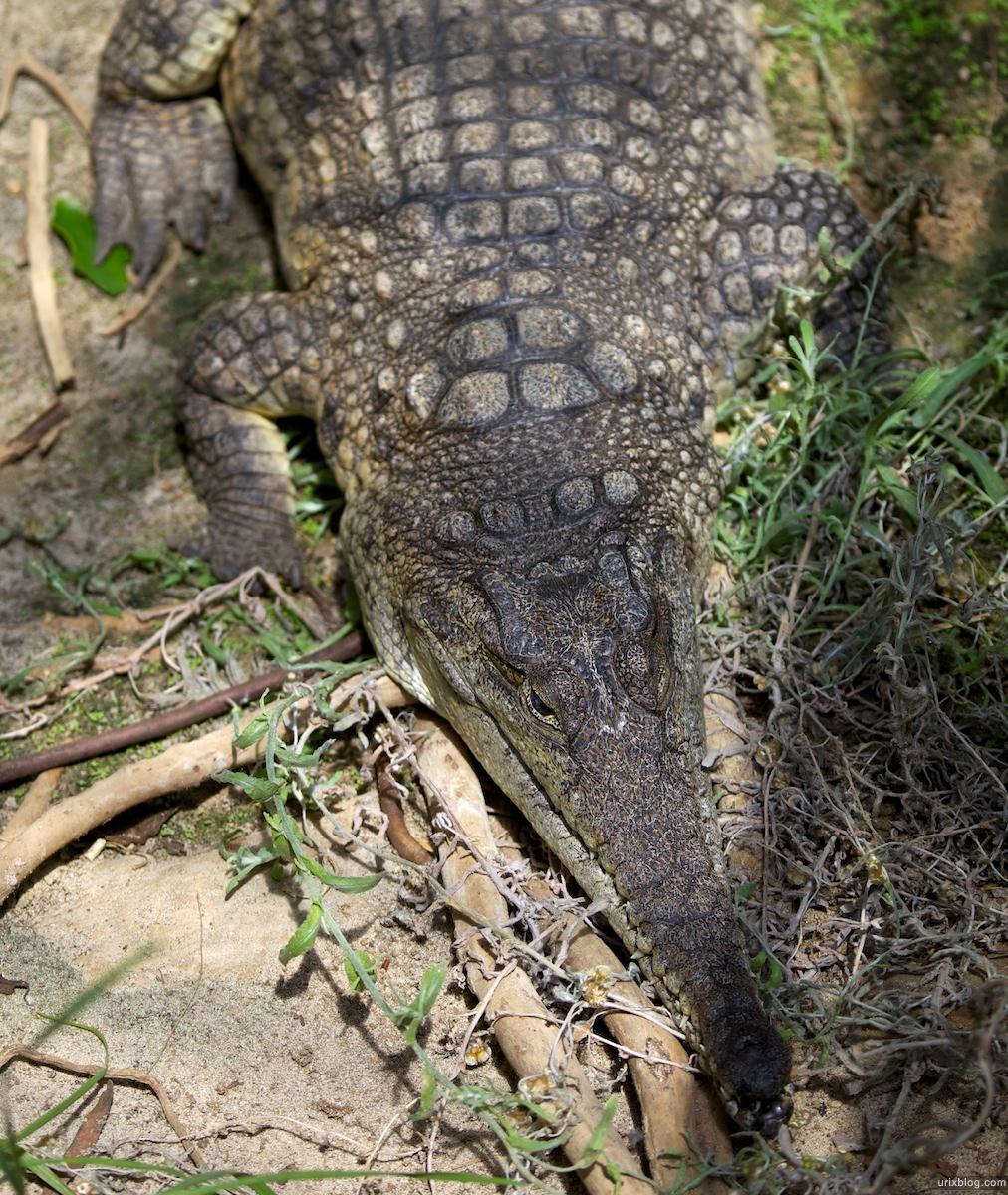 2011 South Australia, Kangaroo Island, Остров Кенгуру, Южная Австралия, Parndana Wildlife Park, crocodile, крокодил