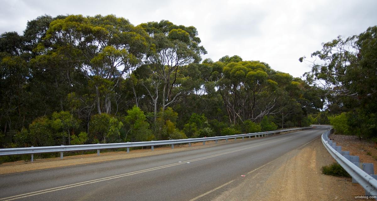2011 2010 South Australia, Kangaroo Island, Остров Кенгуру, Южная Австралия, Flinders Chase, forrest, лес, road, дорога