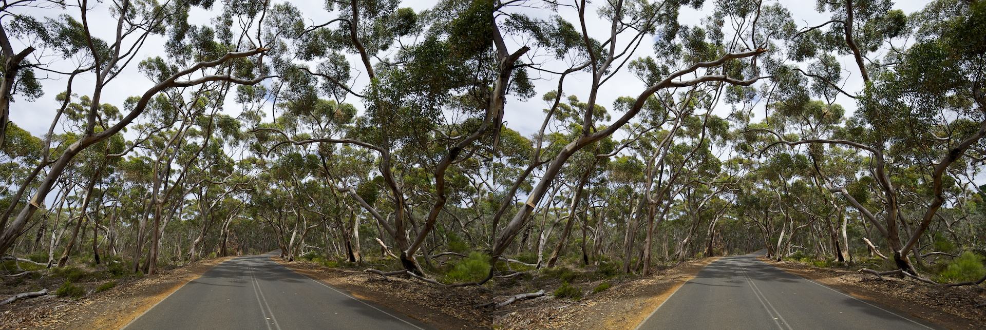 2011 2010 South Australia, Kangaroo Island, Остров Кенгуру, Южная Австралия, Flinders Chase, forrest, лес, 3D stereo cross-eyed, стерео
