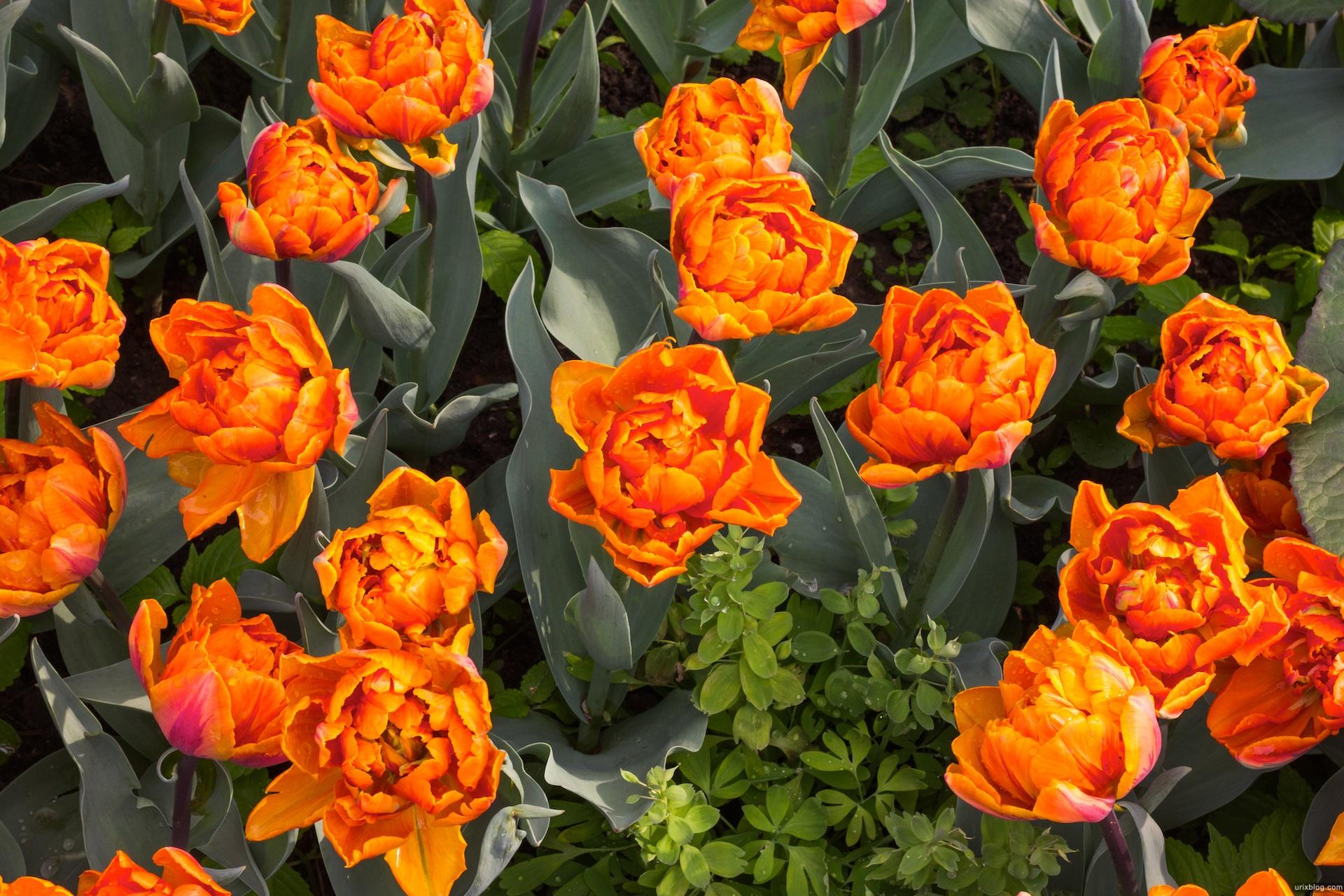 2012 Москва Аптекарский огород Цветы