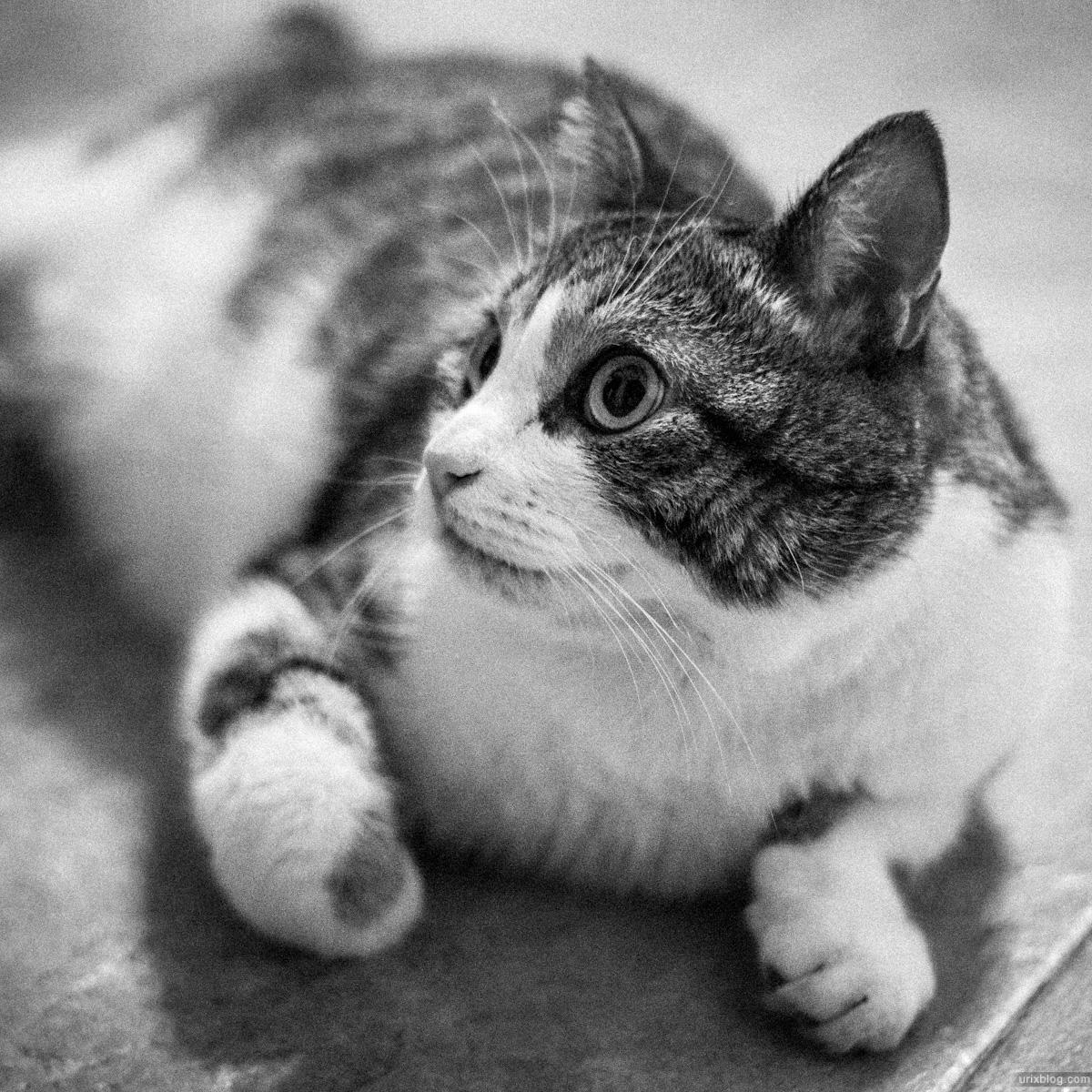 2012 Москва кот котэ cat