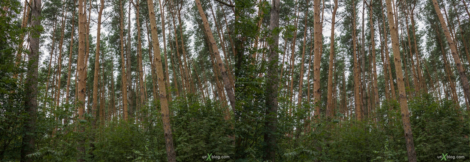 2012 3D stereo stereo pair 3Д стерео Волга река Кимры Лес Тверская область