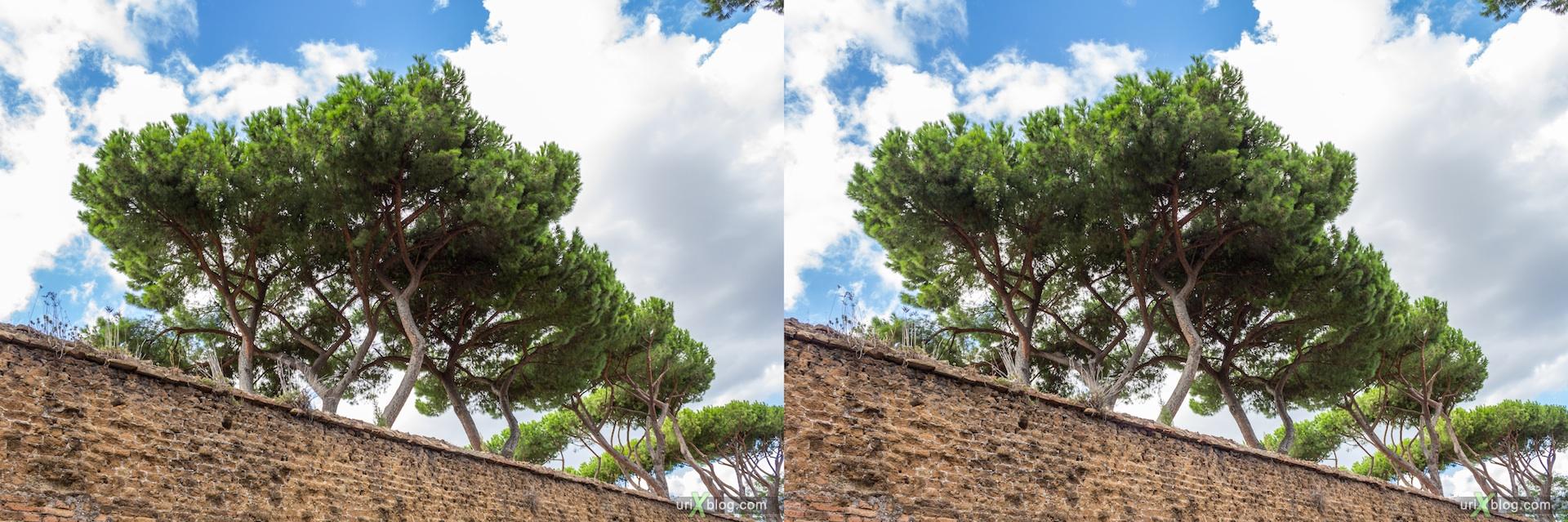2012, забор, апельсиновый сад, парк Савелло, церковь Санта Сабина, Рим, Италия, осень, 3D, перекрёстные стереопары, стерео, стереопара, стереопары