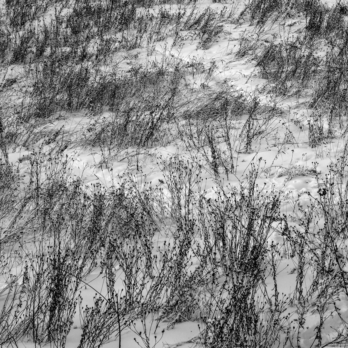 2012, Krylatsky hills, Moscow, Russia, winter, snow, grass