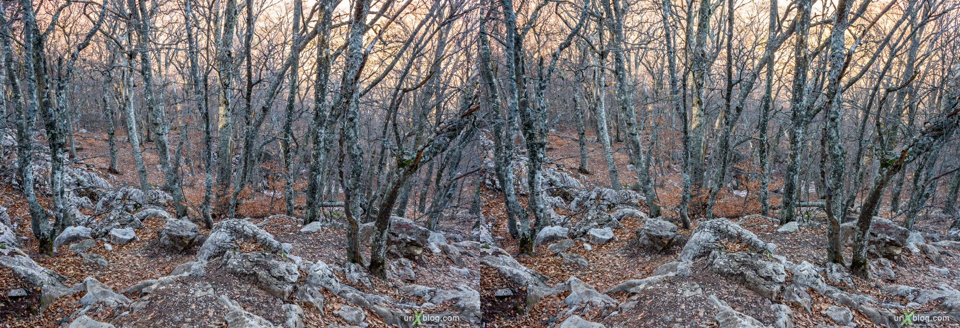 2012, Ai-Petri, mountains, Crimea, Russia, Ukraine, forest, winter, 3D, stereo pair, cross-eyed, crossview, cross view stereo pair, stereoscopic