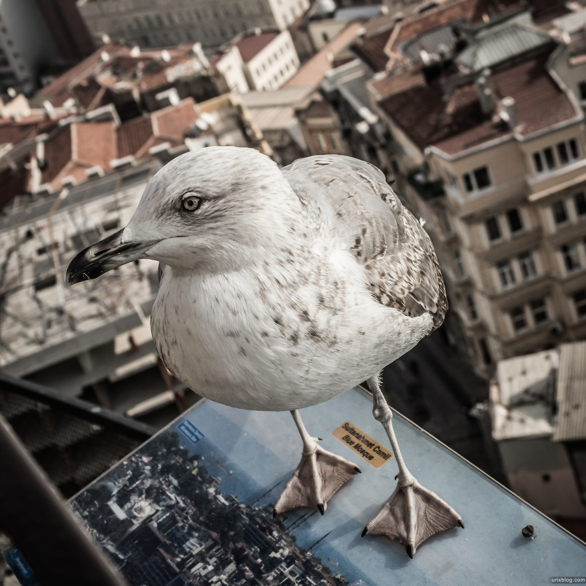 2013, Seagull, Galata tower, panorama, Bosphorus, Istanbul, Turkey, sea, ships, winter