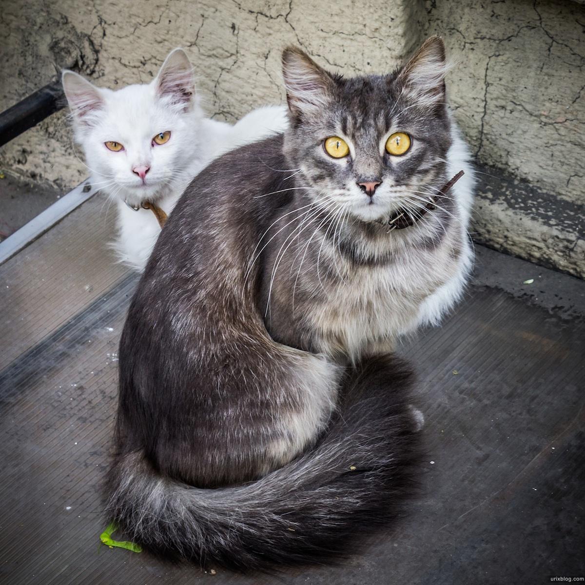 2013, Одесса, Украина, котики, кошки, коты, ошейник