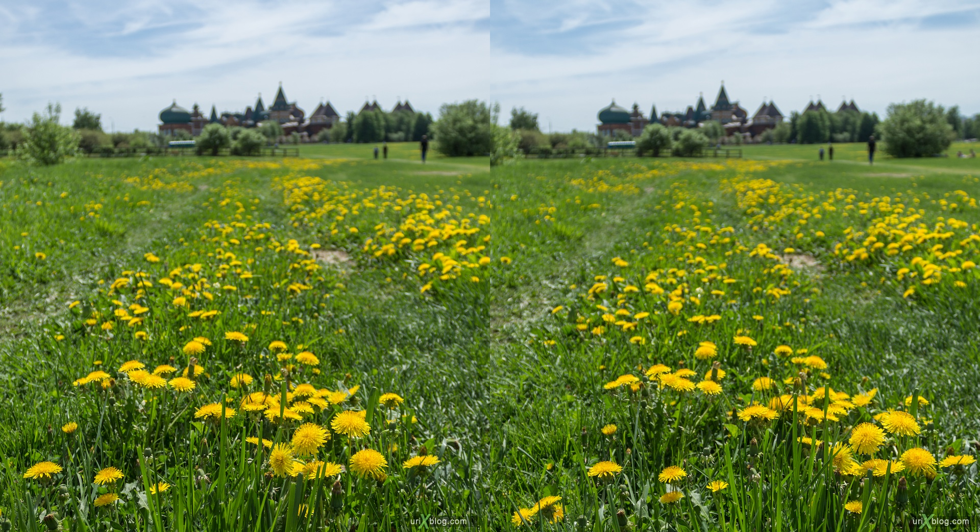 2013, dandelion, flower, grass, park, field, Moscow, Russia, spring, 3D, stereo pair, cross-eyed, crossview, cross view stereo pair, stereoscopic