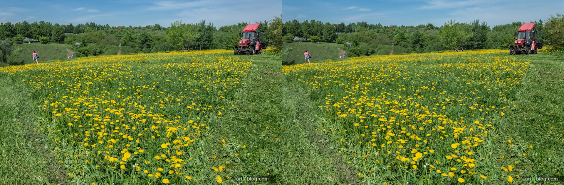 2013, dandelion, lawn mower, flower, grass, park, field, Moscow, Russia, spring, 3D, stereo pair, cross-eyed, crossview, cross view stereo pair, stereoscopic