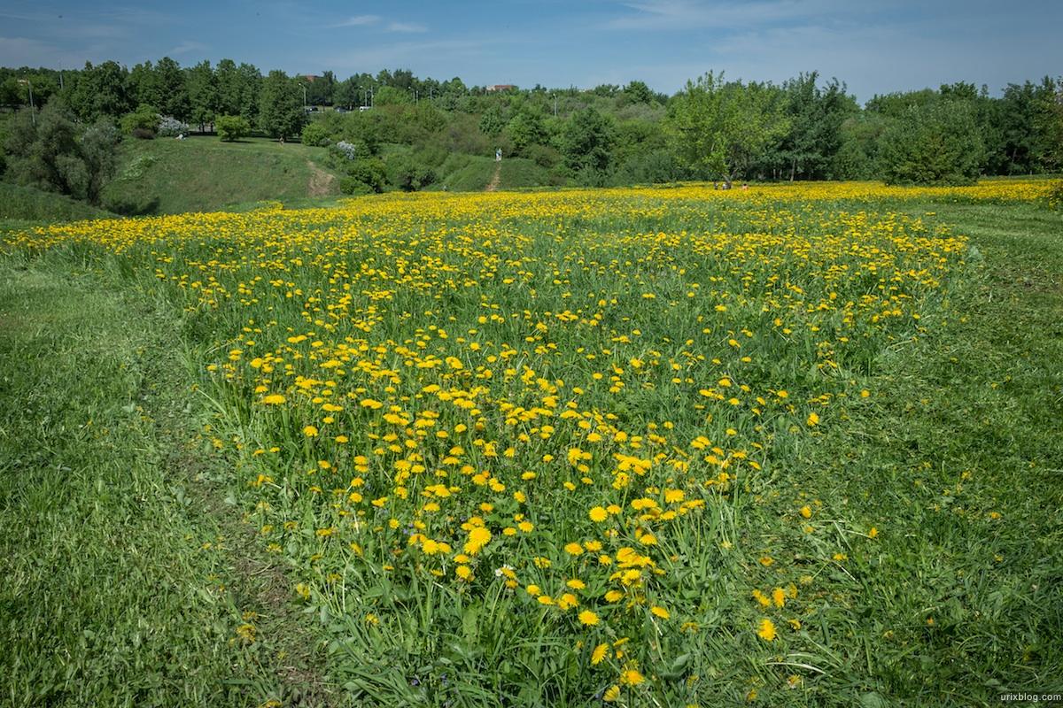 2013, Kolomenskoje, park, dandelions, field, mower, grass, flowers, spring, Moscow, Russia