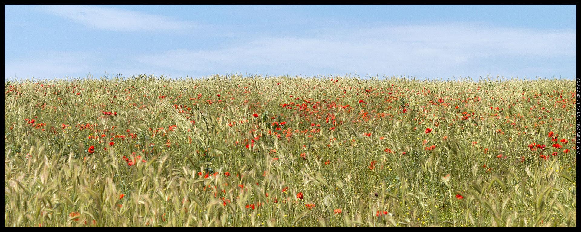 Crimea, Crimean penonsula, panorama, poppy, poppies, field, Simferopol, Russia, 2014, former Ukraine territory