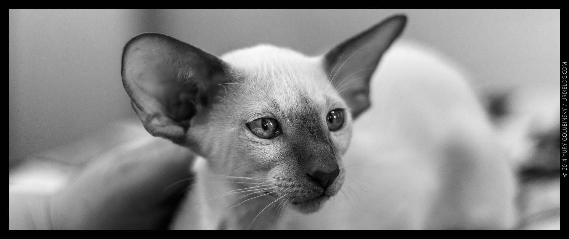 2014, InfoKot exhibition, cat, BW, black and white, panorama, Moscow, Russia